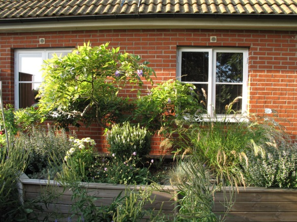 Solrabatten är inspirerad av Piet Oudolf och fylld med gräs, rudbeckior, vädd mm. I lådan växer också ett blåregn.