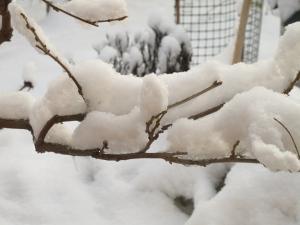 Vinter 8 dec 2