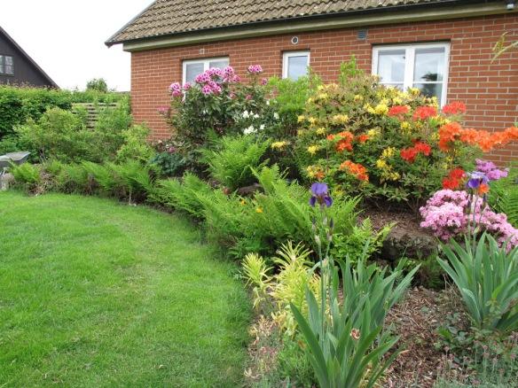 2012 juni. Torvrabatten i blom. Torvblocken kläs allt mer in med grönska och rhododendron-plantorna växer sig allt större.