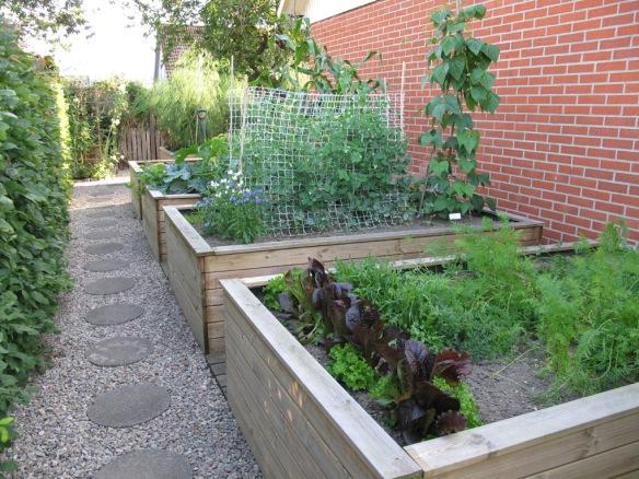 2012 augusti. Nya trädgårdslanden får tillräckligt med ljus och allt växer fint i lådorna.