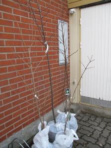 nya träd
