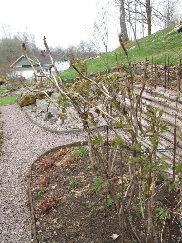 trädgård 5