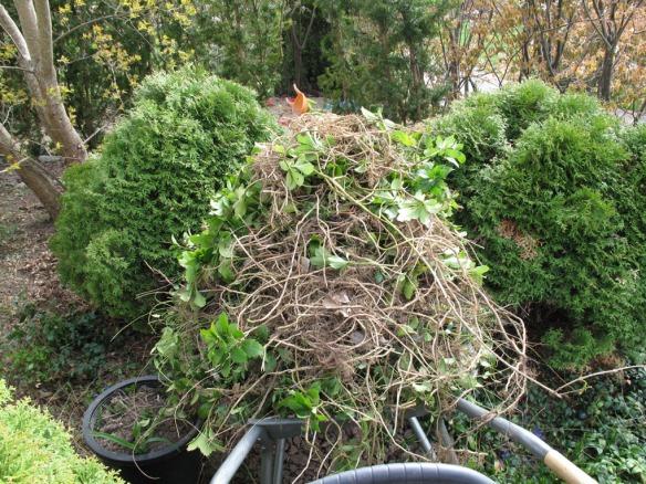 trädplantering 2