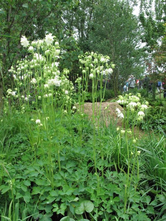 Malmö garden show Dunge med doft 2