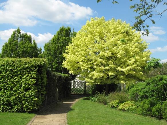 Ryton Gardens 20