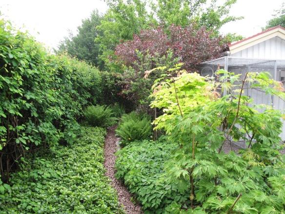 En titt tillbaka in i trädhörnet. Det höga trädet längst bak är en Ginnalalönn.