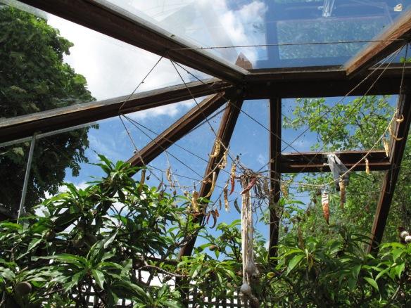 Växthus Ryton Gardens 12
