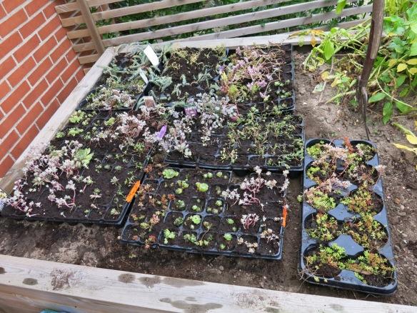 grönt tak småplantor 1