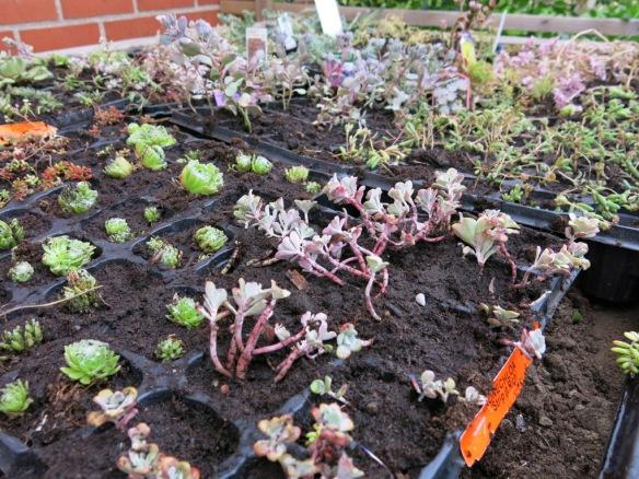 grönt tak småplantor 2