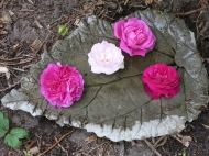 Vattenbad med rosor