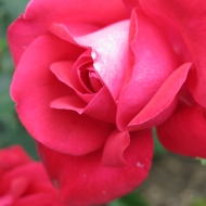 8. Eriks ros