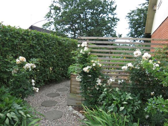 Ingången mot Trädgårdslandet, rosen Ghislaine de Féligonde blommar mot spaljén.