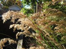 gräs solen