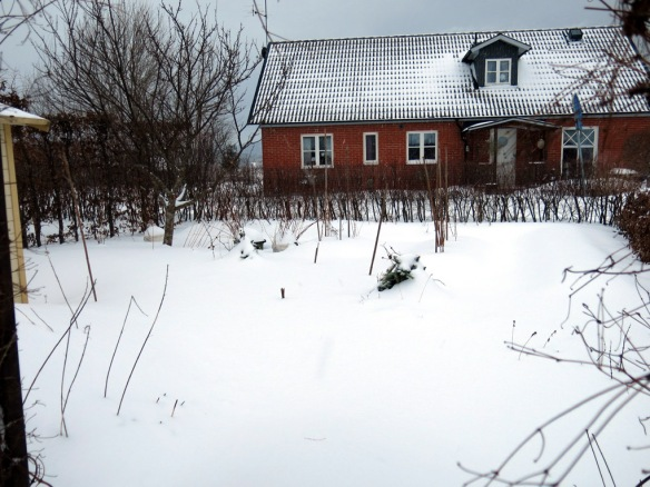 snö 30 jan skära rabatten bärlandet