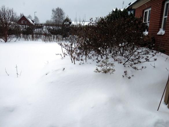 snö 30 jan torvrabatten