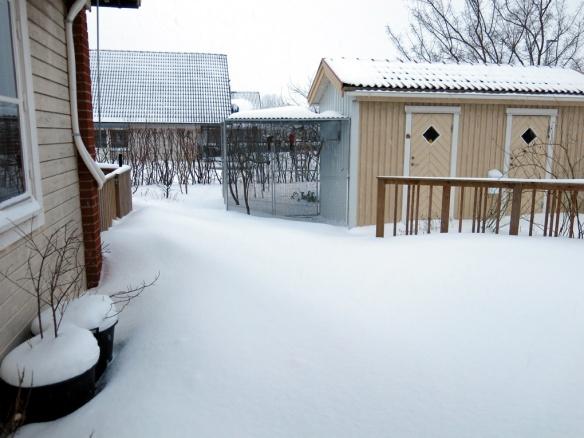 snö 30 jan trädäcket