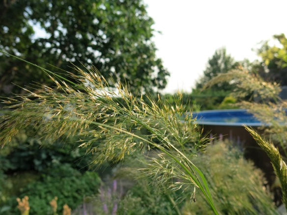 solrabatt gräs pool