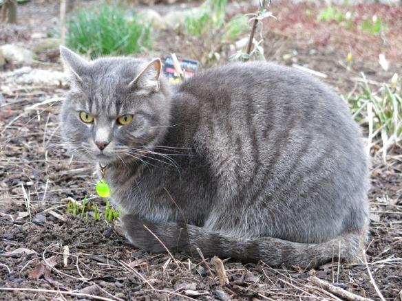 1 mars 14 katt