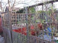 Klematis vid komposthörnan
