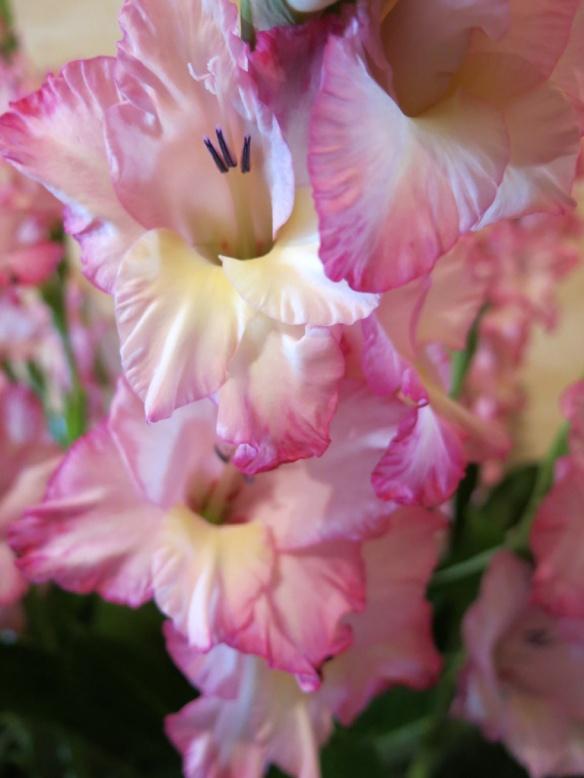 blomsteruppsättning 5
