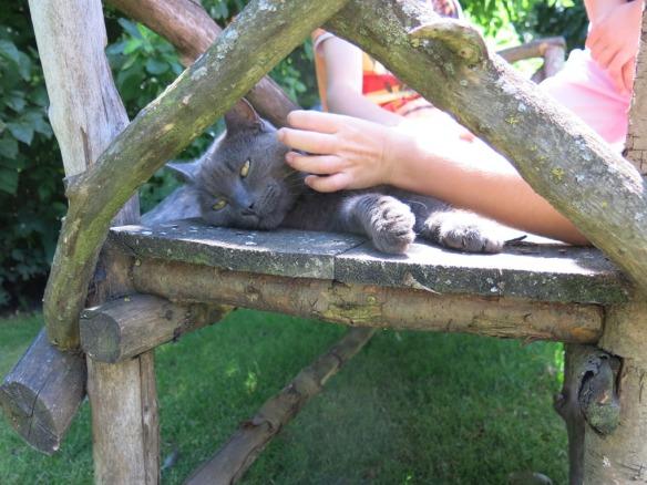 fransk trädgård 12 katt