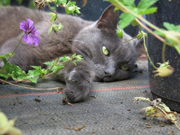 fransk trädgård 14 katt