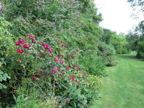 fransk trädgård 18