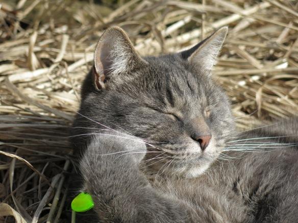 katt solkatt