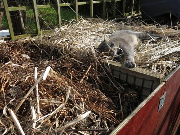 komposthörna katt solkatt
