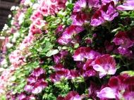 mässa vår trädgård 21