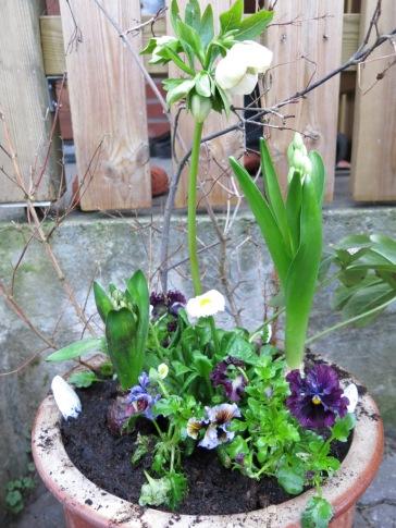 Vårplantering 2014 1