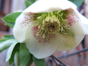 Vårplantering 2014 5