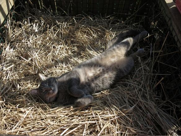 24 april 14 katt