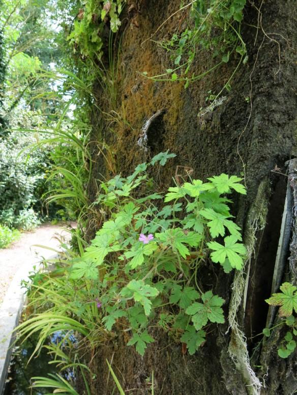 Växtvägg Chaumont  2