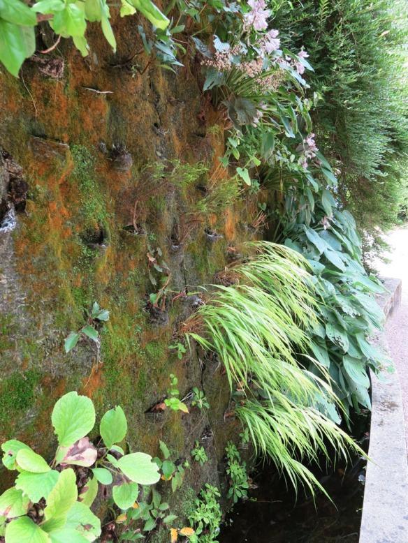 Växtvägg Chaumont 4