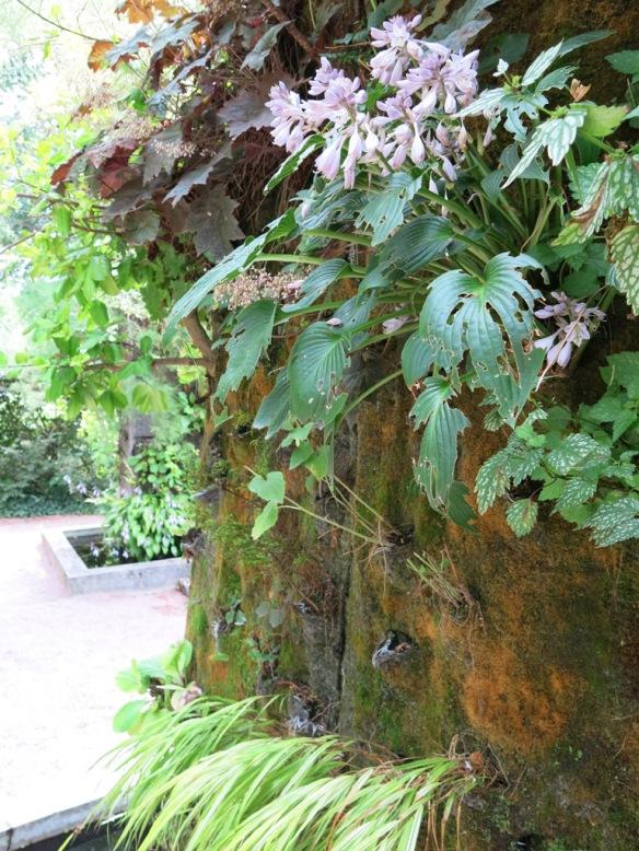 Växtvägg Chaumont 5