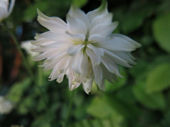 29 maj 14 akleja white barlow