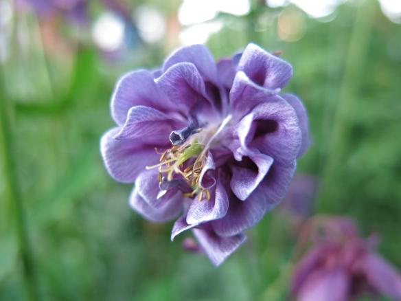 29 maj 14 lila akleja