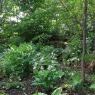 23 maj 14 Carinas trädgård 2