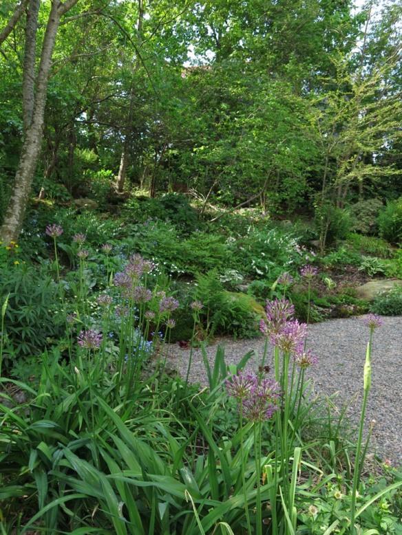 23 maj 14 Carinas trädgård 5