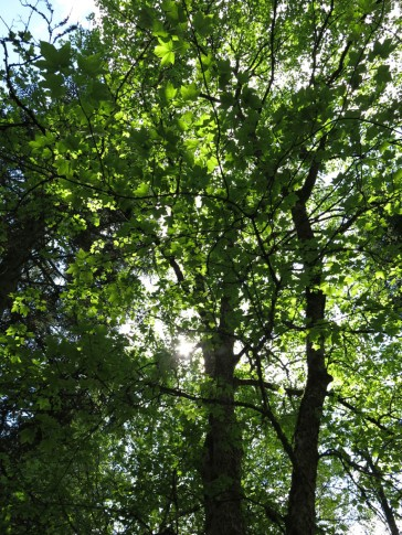 Alphems arboretum 7