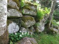 Alphems arboretum 8