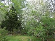 Alphems arboretum 9