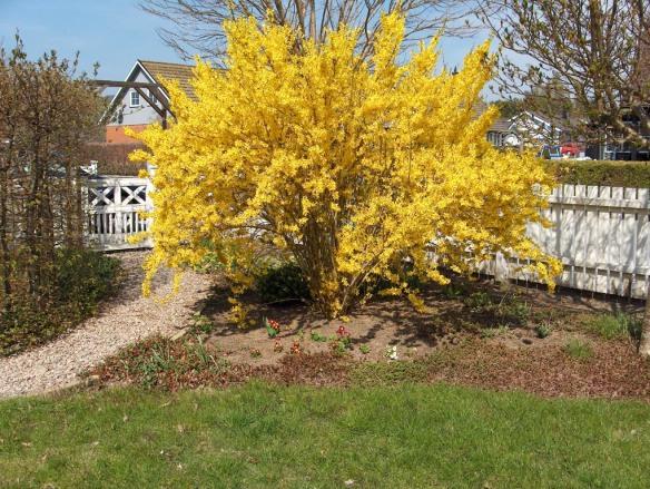 magnoliarabatt före nr2  2009
