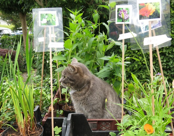 Tusen trädgårdar växtförsäljning 2014