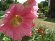 12 juli 14 föra trädgård 4