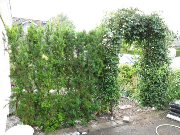 21 sep 2014 trädgårdsboden idegranshäck 1