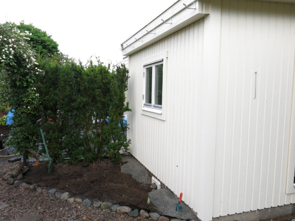 21 sep 2014 trädgårdsboden idegranshäck 3