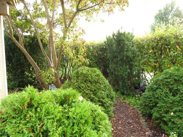 21 sep 2014 trädgårdsboden idegranshäck 4