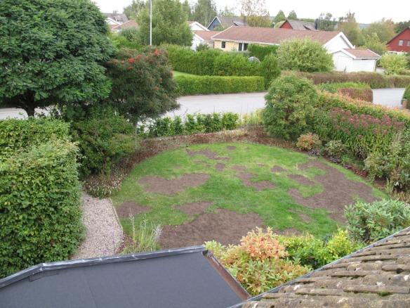 30 sep 12 gräsmatta rosenrabatt framsida